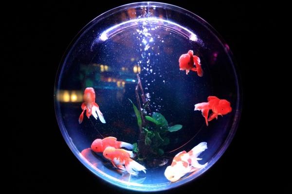 meilleure lampe led aquarium